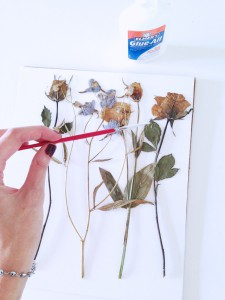 how to press flowers botanicals (12)