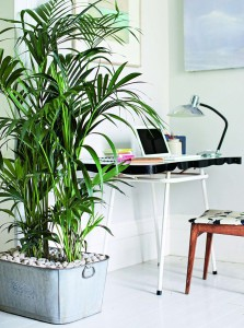 Isabelle Palmer, The House Gardener, Tall Houseplant in Office